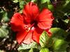mooie bloem Cyprus - Foto van marleen hoogendijk