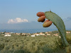 GriechenlandWeb.de zicht auf Stoupa - Foto M. Dekker
