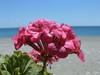 strand, Sougia - Foto van M. Dekker