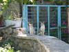 katten - Foto van de dijkies