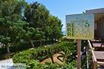GriechenlandWeb.de Agios Fokas - Insel Kos -  Foto 11 - Foto GriechenlandWeb.de
