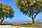 Marmari Kos - Eiland Kos foto 31 - Foto van De Griekse Gids