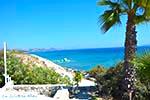 Paradise beach - Eiland Kos -  Foto 20 - Foto van De Griekse Gids