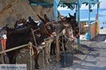 Thermen - Eiland Kos -  Foto 20 - Foto van De Griekse Gids