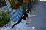 Zia - Eiland Kos -  Foto 29 - Foto van De Griekse Gids