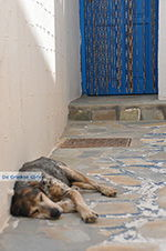 Koufonisi - Eilanden Koufonissia | Cycladen | De Griekse Gids | nr 214 - Foto van De Griekse Gids