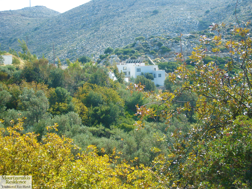 foto Achlada   Heraklion Kreta   Foto 3