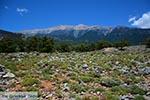 GriechenlandWeb.de Anopolis Kreta - Departement Chania - Foto 14 - Foto GriechenlandWeb.de