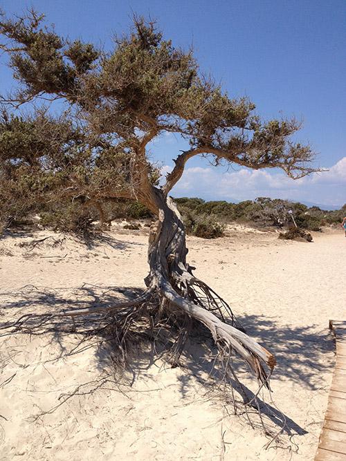 foto Chrissi eiland - Departement Lassithi Kreta - Foto 2