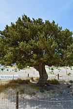 Elafonisi Kreta - Departement Chania - Foto 50 - Foto van De Griekse Gids