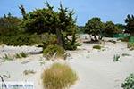 Elafonisi Kreta - Departement Chania - Foto 51 - Foto van De Griekse Gids