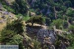 Imbros kloof Kreta - Departement Chania - Foto 18 - Foto van De Griekse Gids