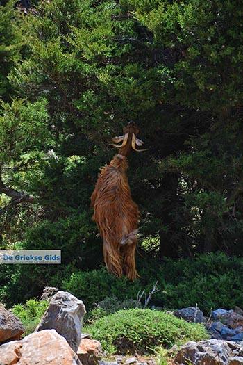 Imbros kloof Kreta - Departement Chania - Foto 1 - Foto van https://www.grieksegids.nl/fotos/kreta/imbros-kloof/normaal/imbros-kloof-kreta-001.jpg
