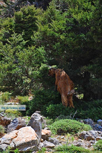 Imbros kloof Kreta - Departement Chania - Foto 2 - Foto van https://www.grieksegids.nl/fotos/kreta/imbros-kloof/normaal/imbros-kloof-kreta-002.jpg