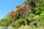 GriechenlandWeb.de Agia Galini | Rethymnon Kreta | Foto 20 - Foto GriechenlandWeb.de