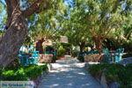 Damnoni | Rethymnon Kreta | Foto 40 - Foto van De Griekse Gids