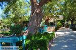 Damnoni | Rethymnon Kreta | Foto 41 - Foto van De Griekse Gids