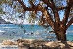 GriechenlandWeb.de Plakias | Rethymnon Kreta | Foto 23 - Foto GriechenlandWeb.de