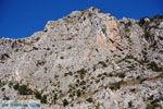Kotsifos Kloof | Rethymnon Kreta | Foto 18 - Foto van De Griekse Gids