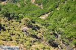 Natuur Centraal Rethymnon Kreta | De Griekse Gids foto 8 - Foto van De Griekse Gids