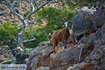GriechenlandWeb.de Koudoumas Kreta - Departement Heraklion - Foto 34 - Foto GriechenlandWeb.de