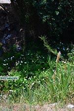 Loutra Kreta - Departement Rethymnon - Foto 7 - Foto van De Griekse Gids