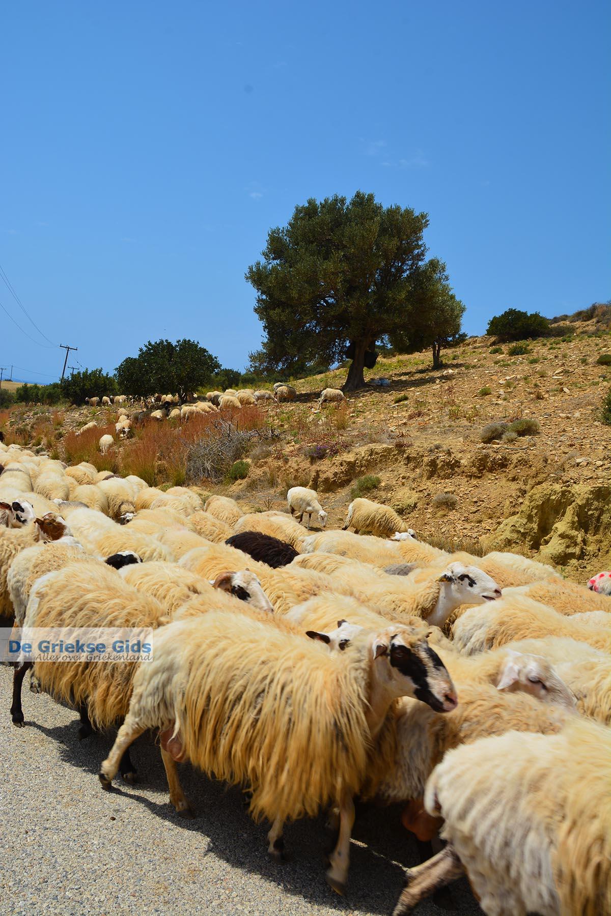 foto Triopetra Kreta - Departement Rethymnon - Foto 2
