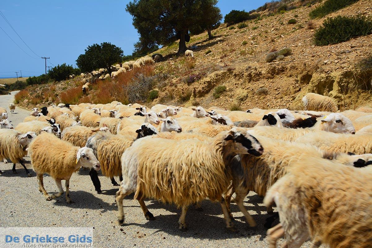 foto Triopetra Kreta - Departement Rethymnon - Foto 3