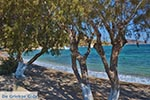 GriechenlandWeb.de Blefoutis beach Partheni - Insel Leros - Griekse Gids Foto 21 - Foto GriechenlandWeb.de