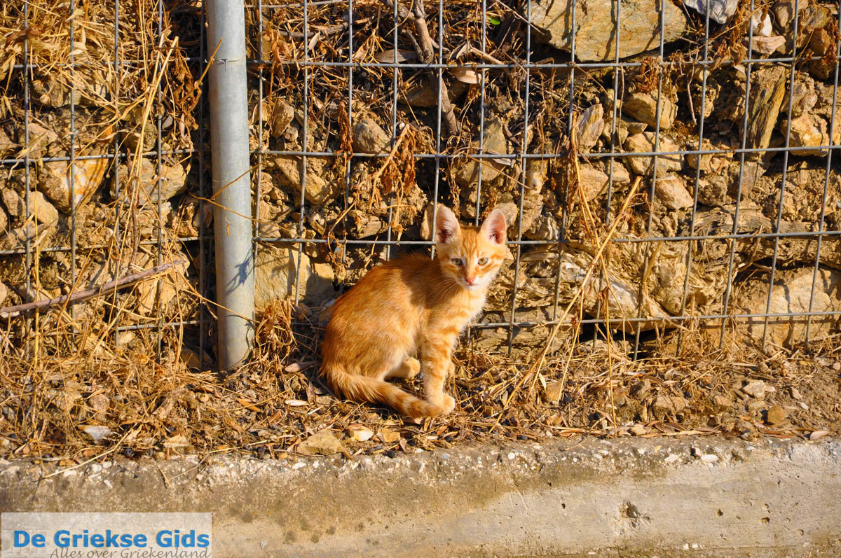 foto Plomari | Lesbos Griekenland 78