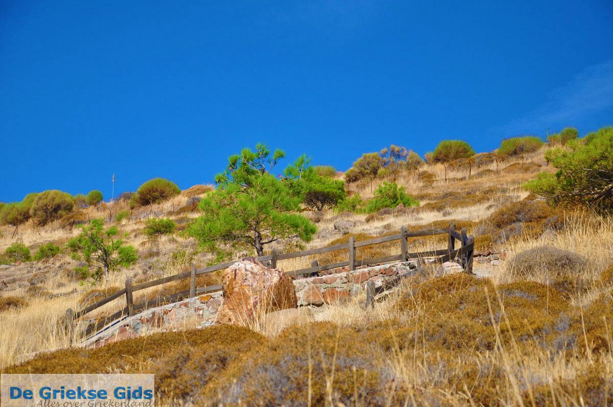foto Versteende woud bij Sigri   Lesbos Griekenland   Foto 25
