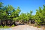 GriechenlandWeb Bij watervallen Pesas | Lesbos Griechenland | GriechenlandWeb.de 2 - Foto GriechenlandWeb.de