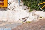 GriechenlandWeb.de Agiasos (Agiassos) | Lesbos Griechenland | GriechenlandWeb.de 7 - Foto GriechenlandWeb.de