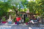 GriechenlandWeb.de Agia Paraskevi Lesbos | Griechenland | GriechenlandWeb.de 13 - Foto GriechenlandWeb.de