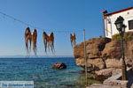 GriechenlandWeb.de Sykaminia - Skala Sykaminia | Lesbos | GriechenlandWeb.de 5 - Foto GriechenlandWeb.de