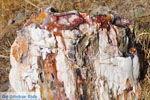 Versteende woud bij Sigri | Lesbos Griekenland | Foto 11