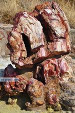 GriechenlandWeb Versteende woud Sigri | Lesbos Griechenland | Foto 36 - Foto GriechenlandWeb.de