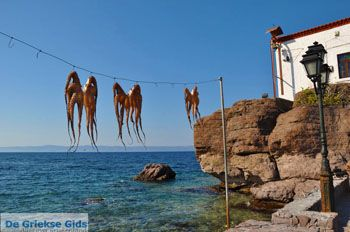 Sykaminia - Skala Sykaminia | Lesbos | De Griekse Gids 5 - Foto van De Griekse Gids