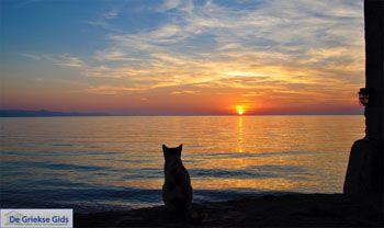 Kat geniet van zonsondergang in Molyvos | Lesbos - Foto van https://www.grieksegids.nl/fotos/lesbos/normaal/lesbos-griekenland-696.jpg