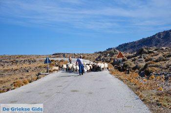 Schapen en schaapherders bij Sigri | Lesbos Grikenland | Foto 2 - Foto van https://www.grieksegids.nl/fotos/lesbos/normaal/lesbos-griekenland-766.jpg