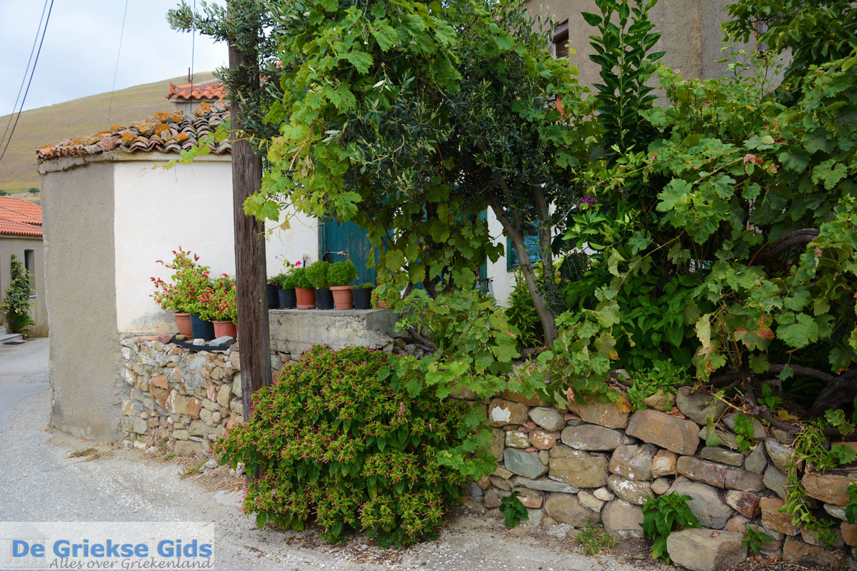 foto Dafni Limnos (Lemnos) | Griekenland | Foto 7