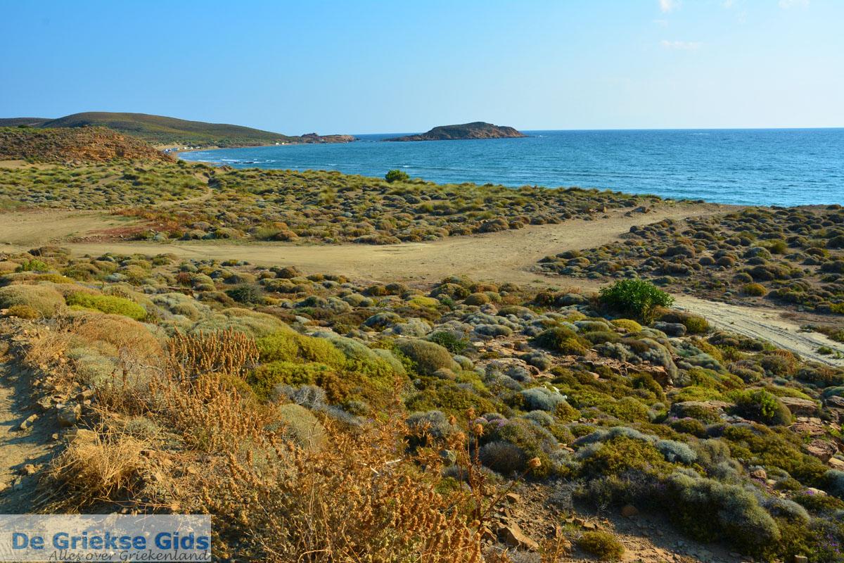 foto Bij Gomati en woestijn Amothines Katalakos Limnos (Lemnos) foto 11