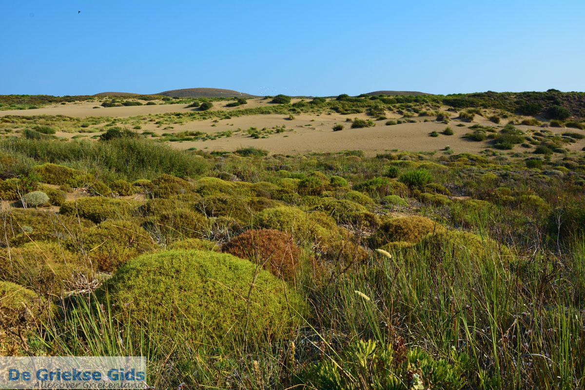 foto Bij Gomati en woestijn Amothines Katalakos Limnos (Lemnos) foto 14