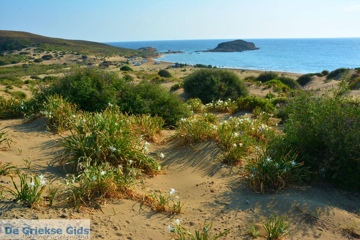 foto Bij Gomati en woestijn Amothines Katalakos Limnos (Lemnos) foto 20