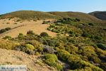 Amothines woestijn bij Katalakos Limnos (Lemnos) | Foto 15 - Foto van De Griekse Gids