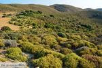 GriechenlandWeb.de Amothines woestijn Katalakos Limnos (Lemnos) | Foto 16 - Foto GriechenlandWeb.de