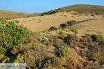 Amothines woestijn bij Katalakos Limnos (Lemnos) | Foto 18 - Foto van De Griekse Gids