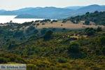Bij Gomati en woestijn Amothines Katalakos Limnos (Lemnos) foto 2 - Foto van De Griekse Gids