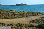 Bij Gomati en woestijn Amothines Katalakos Limnos (Lemnos) foto 6 - Foto van De Griekse Gids