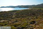 Bij Gomati en woestijn Amothines Katalakos Limnos (Lemnos) foto 8 - Foto van De Griekse Gids